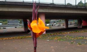 orange canna lily